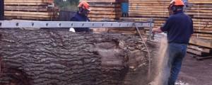 inhouse cutting oak