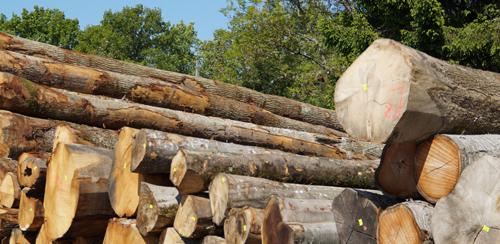 Pile of logs from oak suppliers
